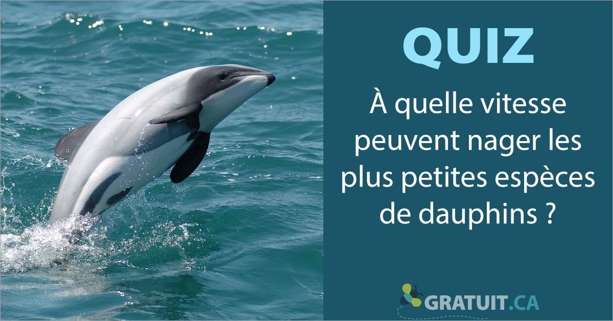 quiz À quelle vitesse peuvent nager les plus petites espèces de dauphins?