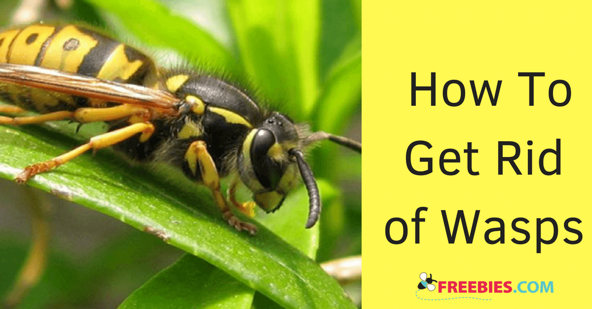 https://storage.googleapis.com/freebies-com/resources/shareables/226/how-to-get-rid-of-wasps.png