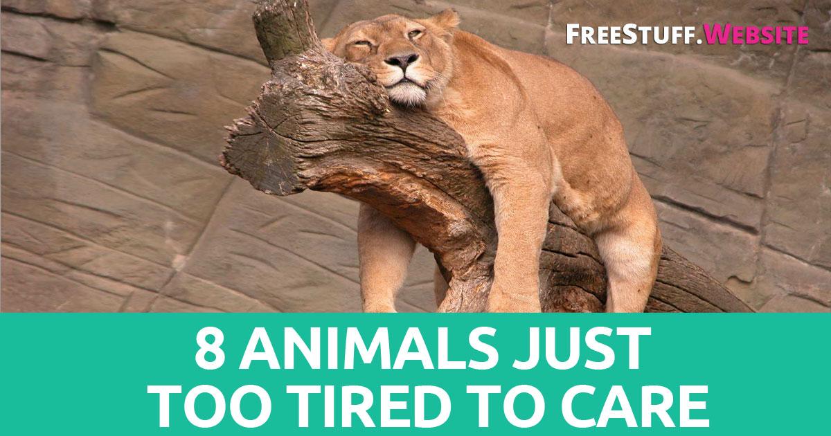 https://storage.googleapis.com/freebies-com/resources/shareables/26/tired-animals.jpg