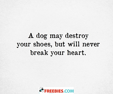 A dog may destroy your shoes