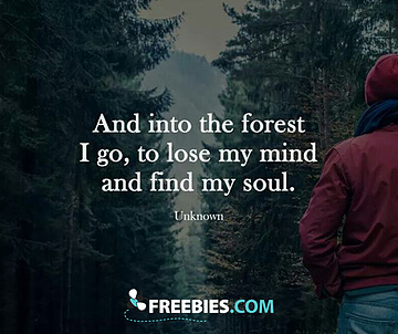 Into the Forest I Go!