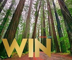 Win a Trip to the California Redwood Coast