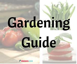 Gardening Tips Guide