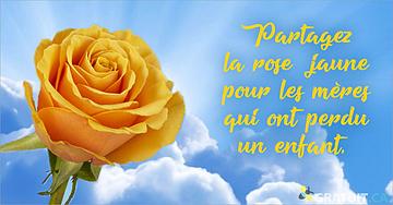 Partagez la rose jaune pour les mères qui ont perdu un enfant