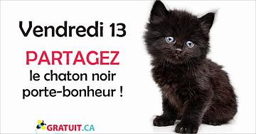 Vendredi 13, partagez le chaton noir!