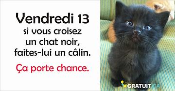 Vendredi 13, donnez des câlins aux chats noirs!