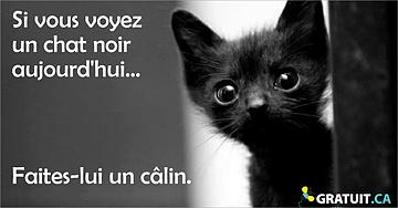 Si vous voyez un chat noir aujourd'hui...