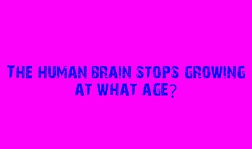 Quick Quiz: Brain Size