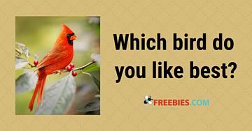 POLL: Which bird do you prefer?