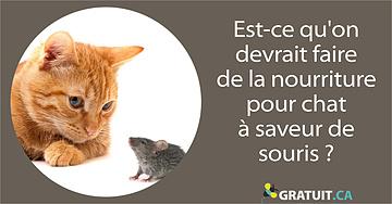 Est-ce qu'on devrait faire de la nourriture pour chat à saveur de souris?