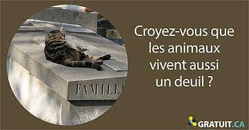 Croyez-vous que les animaux vivent aussi un deuil?