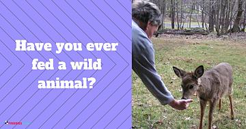 wild animal feeding