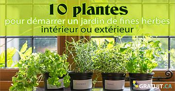 Démarrer un jardin de fines herbes de base