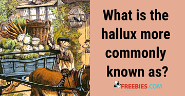 TRIVIA: What is the hallux more commonly known as?