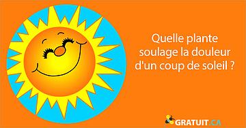 Quelle plante soulage la douleur d'un coup de soleil?