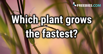 TRIVIA: Which plant grows the fastest?
