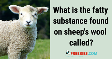 TRIVIA: What is the fatty substance found on sheep's wool?