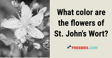 TRIVIA: What colour are the flowers of St Johns wort?