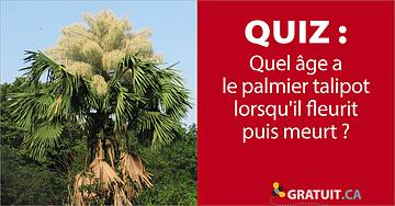 Quel âge a le palmier talipot lorsqu'il fleurit puis meurt?