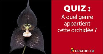À quel genre appartient cette orchidée?