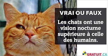 Vrai ou faux : Les chats ont une vision nocturne supérieure à celle des humains.