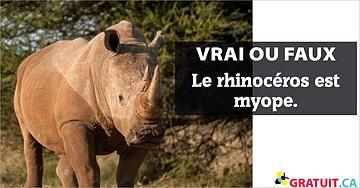 Vrai ou faux : Le rhinocéros est myope.
