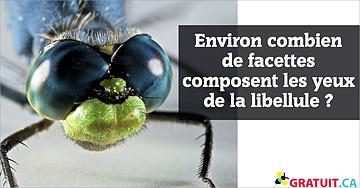 Environ combien de facettes composent les yeux de la libellule?