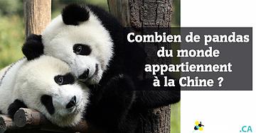 Combien de pandas du monde appartiennent à la Chine?