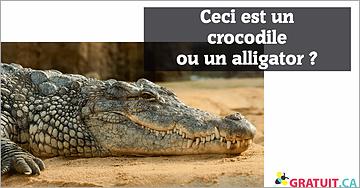 Ceci est un crocodile ou un alligator?