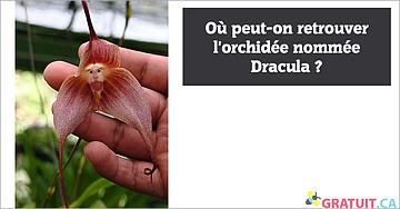 Où peut-on retrouver l'orchidée nommée Dracula?