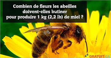 Combien de fleurs les abeilles doivent-elles butiner pour produire 1 kg (2,2 lb) de miel?