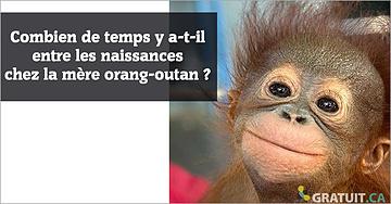 Combien de temps y a-t-il entre les naissances chez la mère orang-outan?