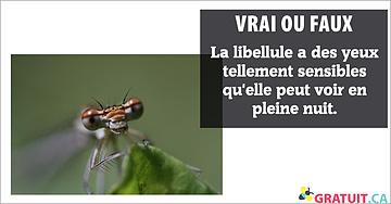 Vrai ou faux :La libellule a des yeux tellement sensibles qu'elle peut voir en pleine nuit.