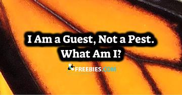 guest not a pest