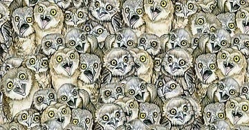 Can You Spot A Cat Among These Owls? It's A Little Harder Than You Think