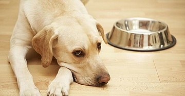 Your Dog's Food Bowl is Making Both of You Sick