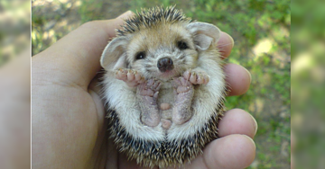 12 Miniature Animals That Will Brighten Your Day