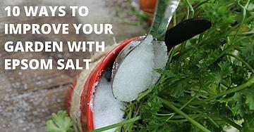 10 Ways To Improve Your Garden With Epsom Salt
