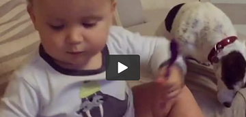 Adorable Little Boy Spoon Feeding His Pup