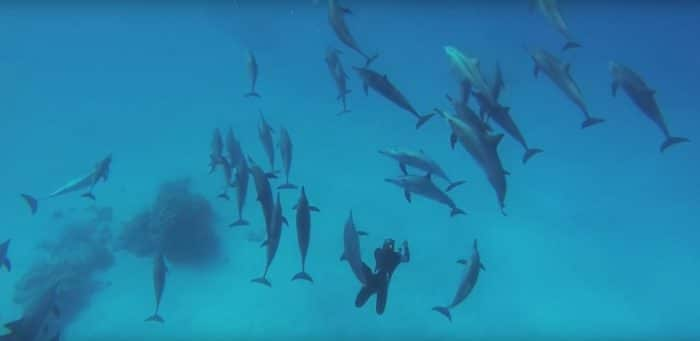 Freedive With Dolphins In The Red Sea On A One-Week Liveaboard Trip This October - Freediving in United Arab Emirates. Courses, Certificates and Equipment