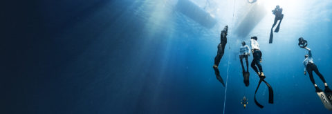 We are a professional community of freedivers