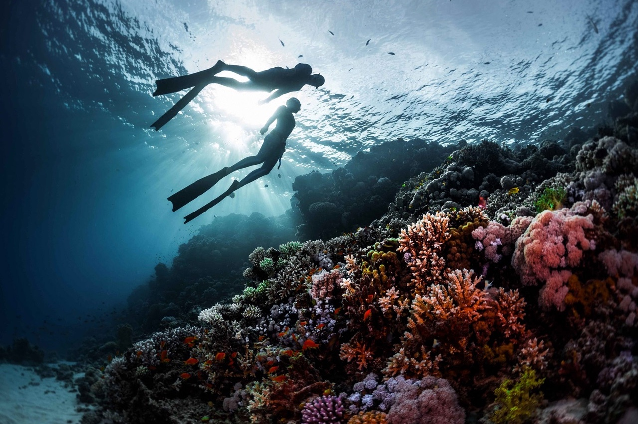 Behaving with marine life. Short memo for beginner freedivers - Freediving in United Arab Emirates. Courses, Certificates and Equipment