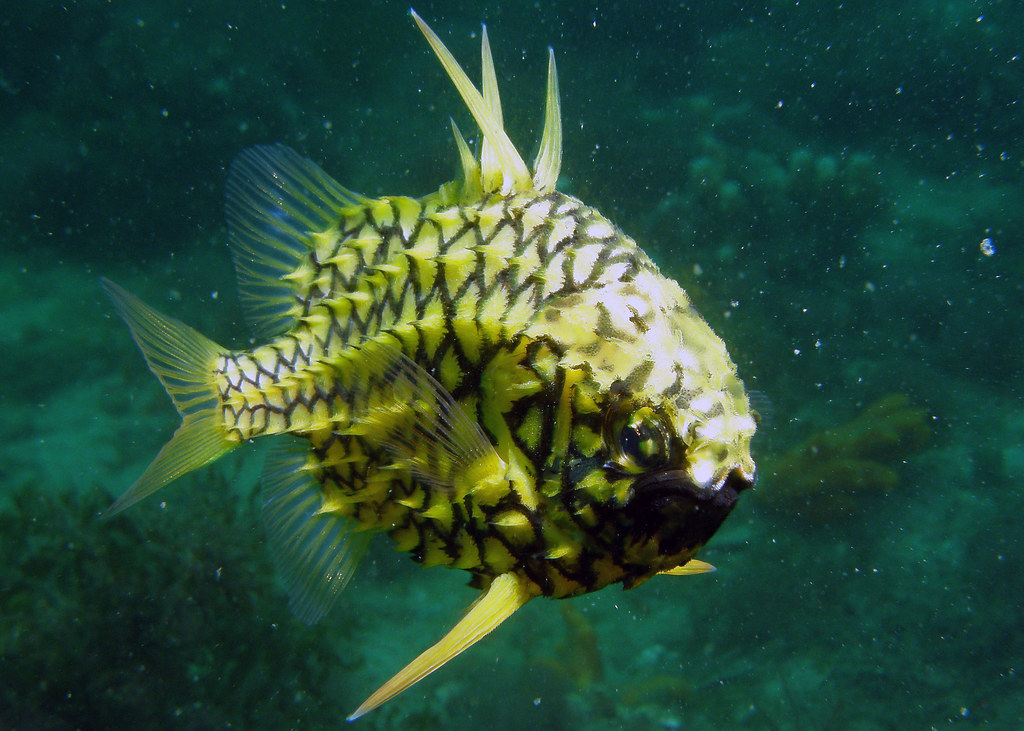 Pineapple Fish - Freediving in United Arab Emirates. Courses, Certificates and Equipment