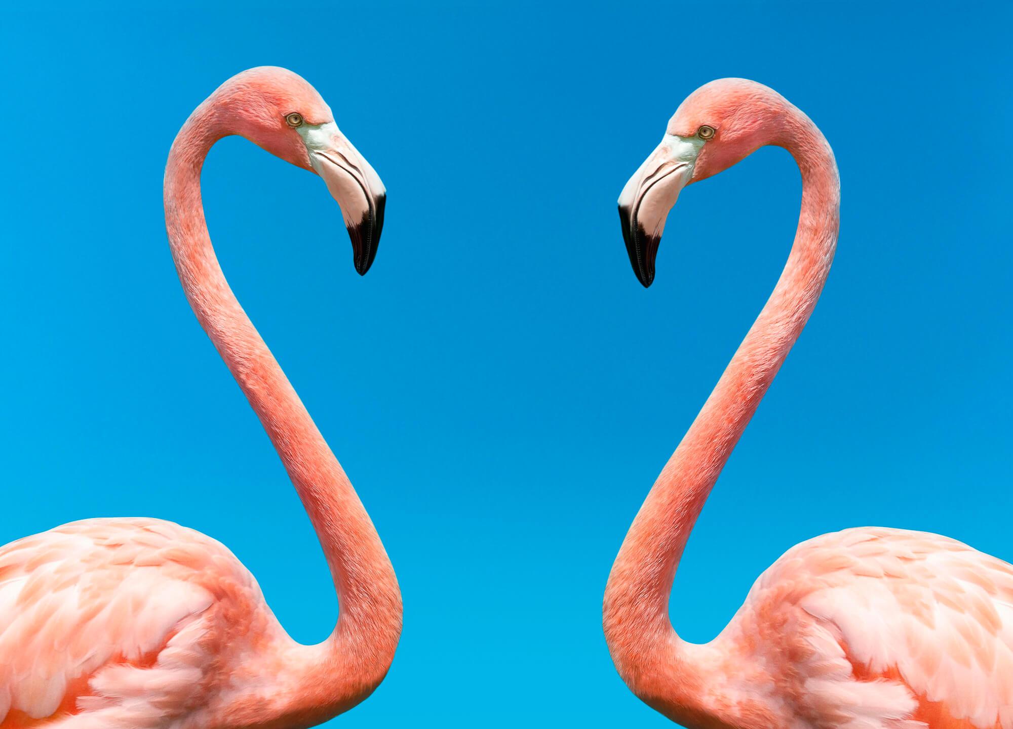 the mating game flamingos