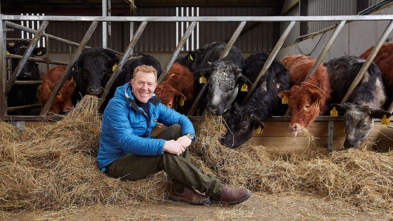 adam henson with cows on a farm