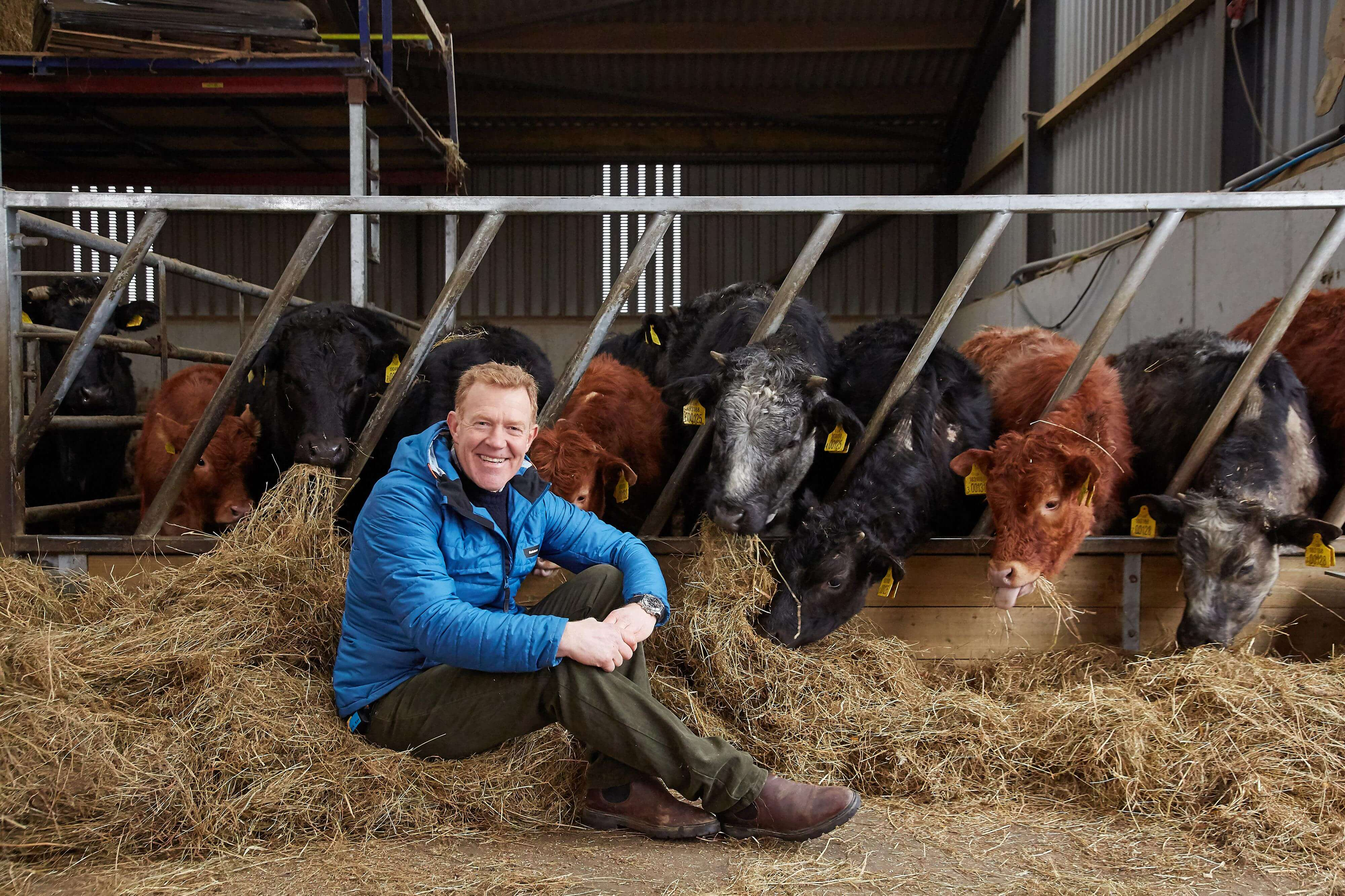 adam henson with cows