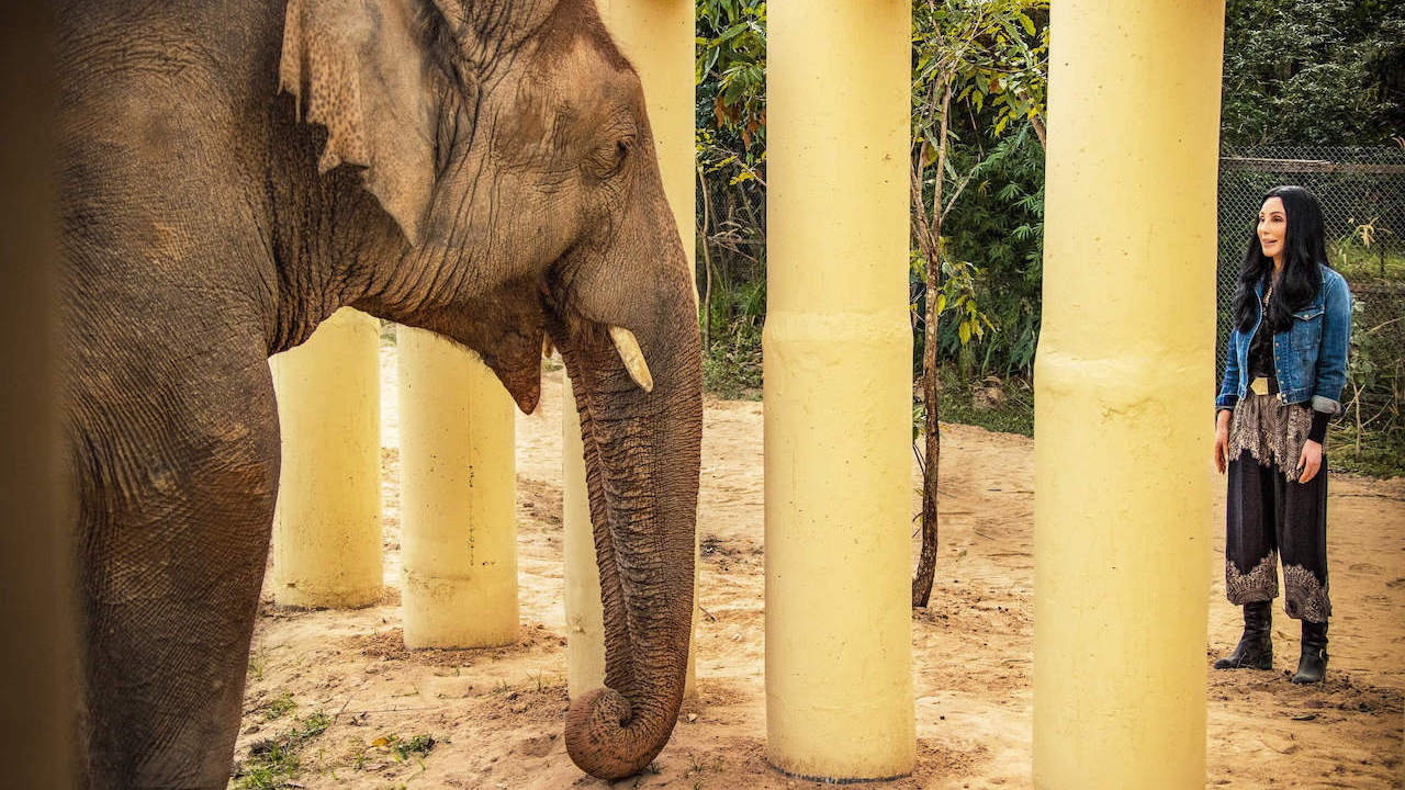 Cher and Kaavan the elephant