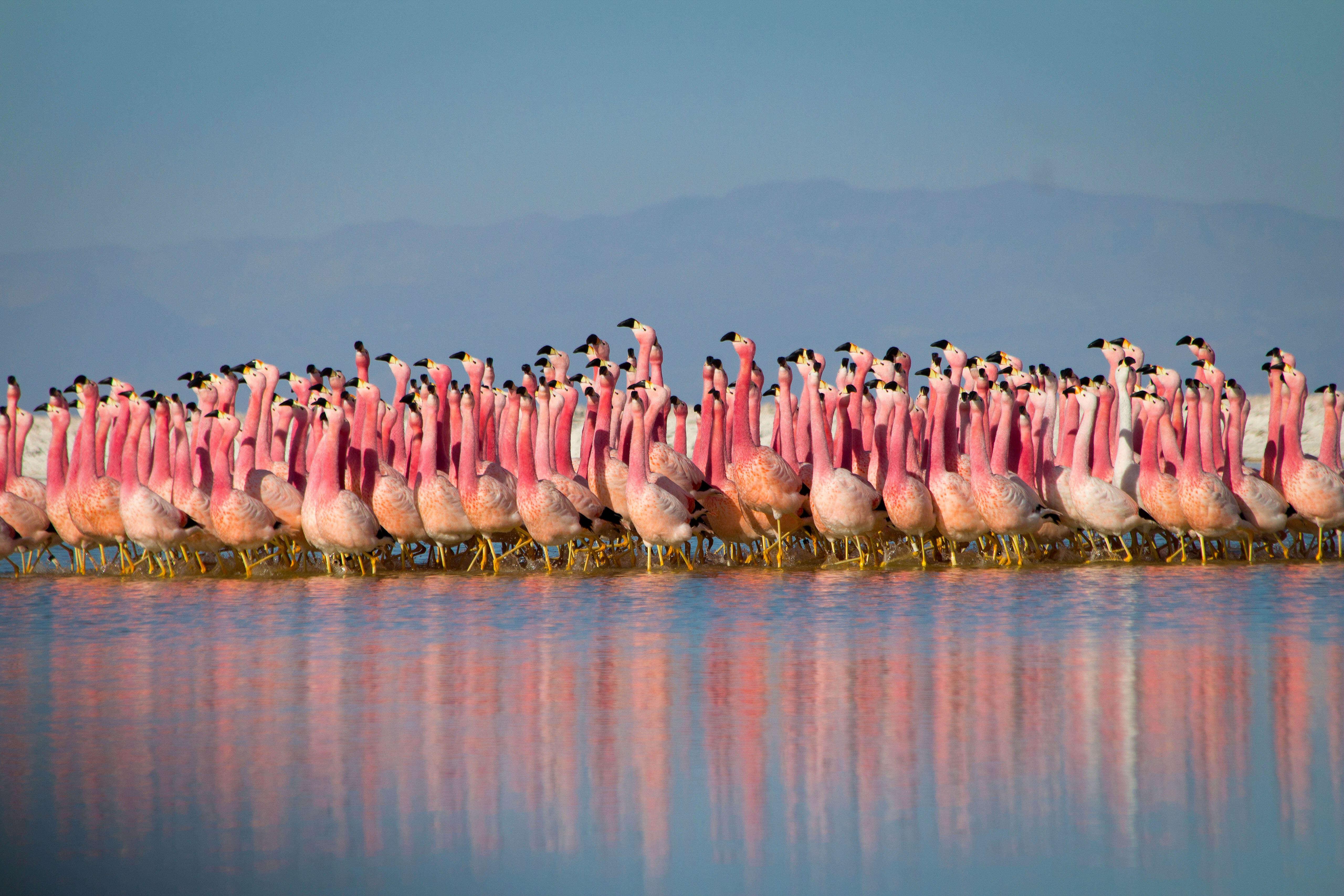 planet earth flamingos