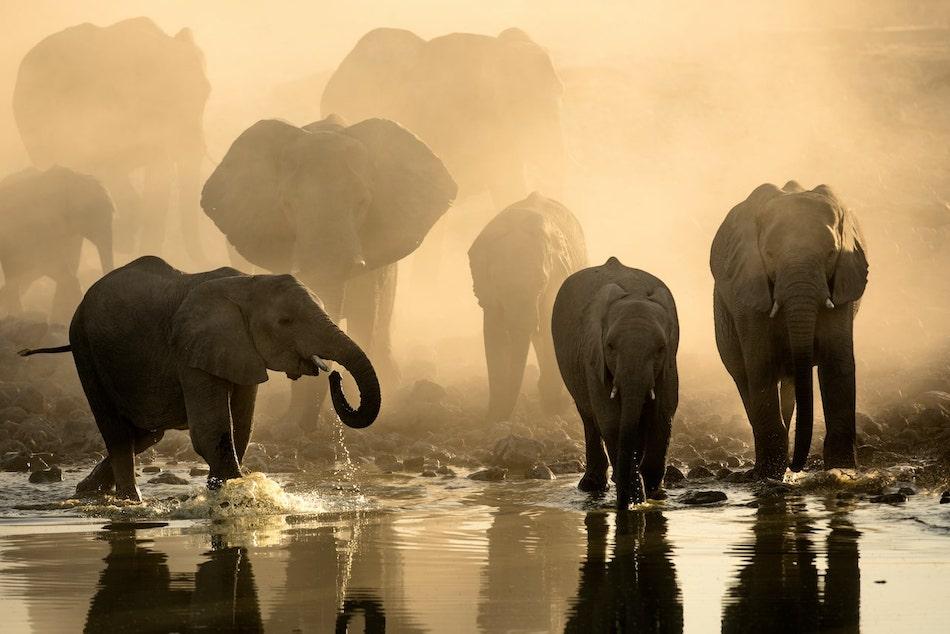 Waterhole africas animal oasis