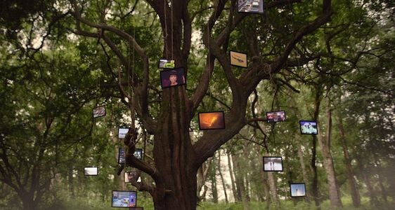 our stories tv tree